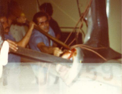 Uno squalo a Panama