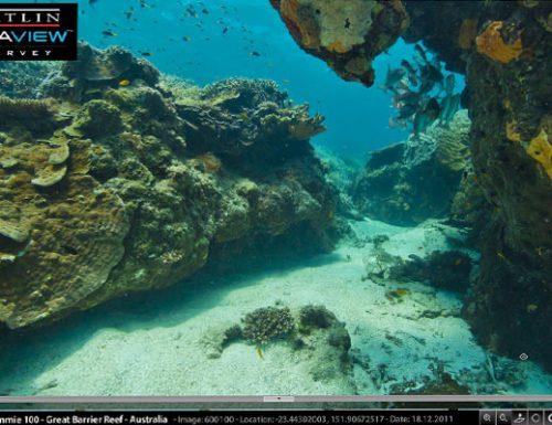 La barriera corallina in diretta con Google Seaview !