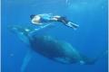 """A Tonga, nuotare con le balene nelle """"isole dell'amicizia"""""""