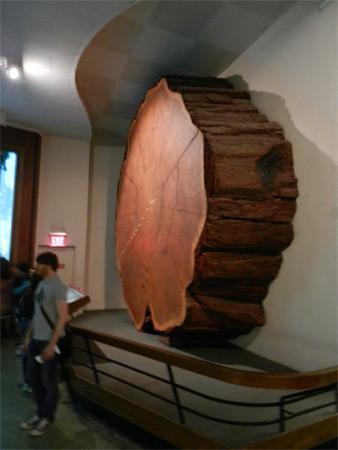 Museo Storia Naturale New York.New York Una Visita All American Museum Of Natural History