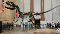 """Ricordate il film """"Una notte al museo"""" ? Volete rivivere le emozioni del protagonista Ben Stilleralla prese con animali e personaggi storici ? Bene, se […]"""